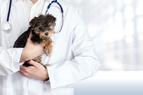 Tratamiento homeopático en animales
