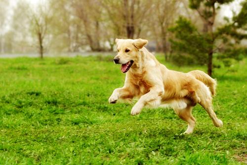 Las actividades físicas para animales que harán que tu mascota esté en forma