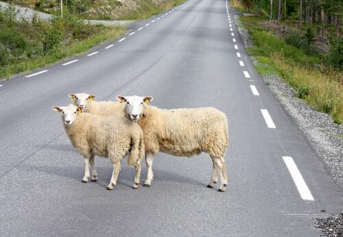 Circulación de animales en la vía pública