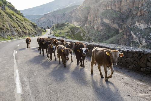 Animales por la carretera