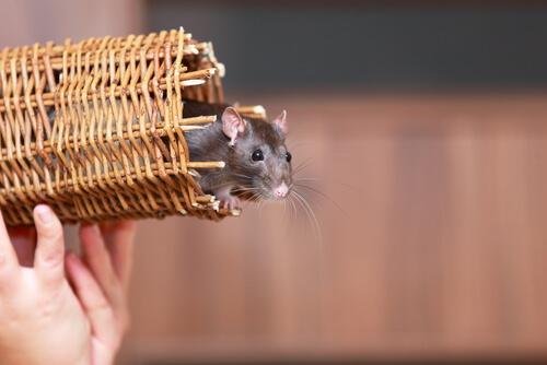4 animales que pueden vivir en un apartamento