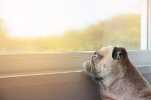 Consejos para animar a las mascotas deprimidas