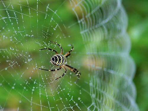 Araña teje una tela