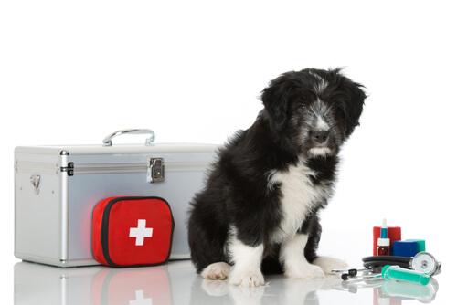 Cómo hacer un botiquín de primeros auxilios para mi mascota