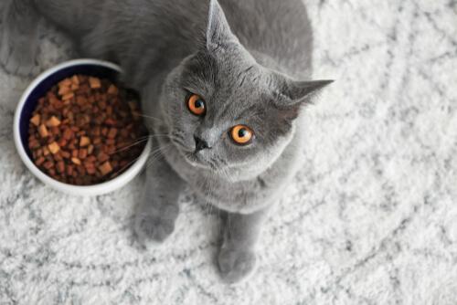 Equilibrio natural gatos gordos baja en calorías
