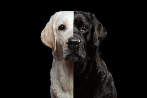 Los perros clonados, ¿un negocio legal?