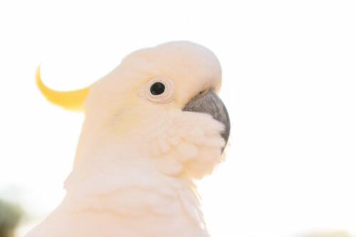 Cobertura para aves