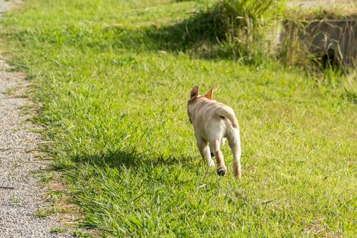 Cómo evitar que mi perro se escape