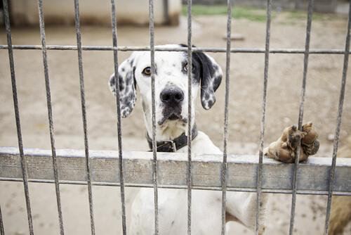 Consecuencias legales del maltrato animal