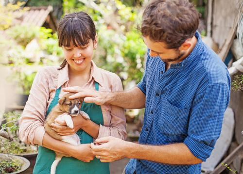 Contrato de adopción de animales entre particulares