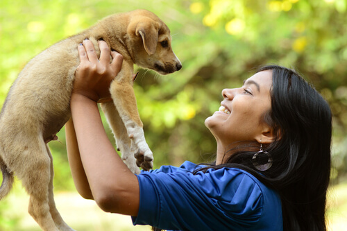 Contrato de adopción de mascotas