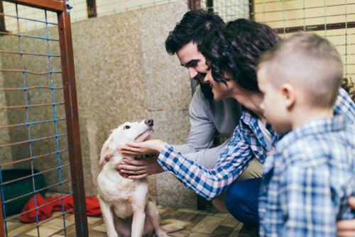 ¿Cómo hacer un contrato de compraventa de animales?