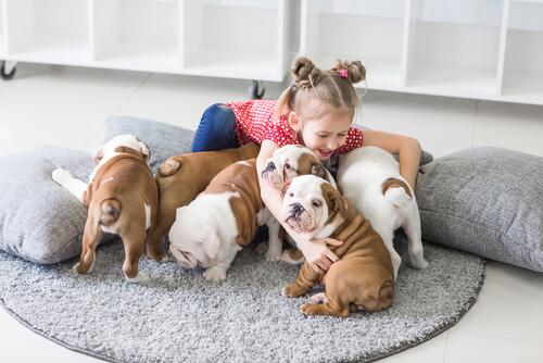 ¿Cuántos animales puedo tener legalmente en casa?