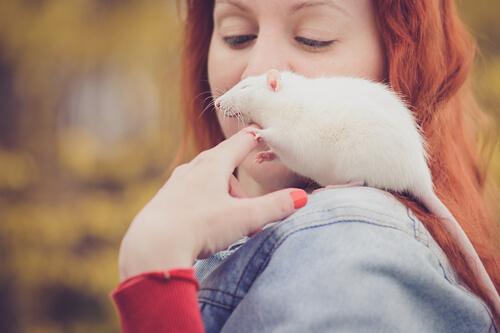 Cuidado de ratas