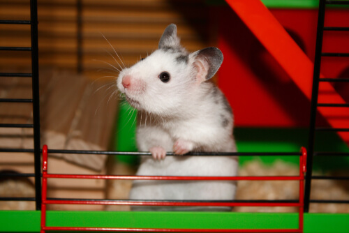 Cuidado de ratones