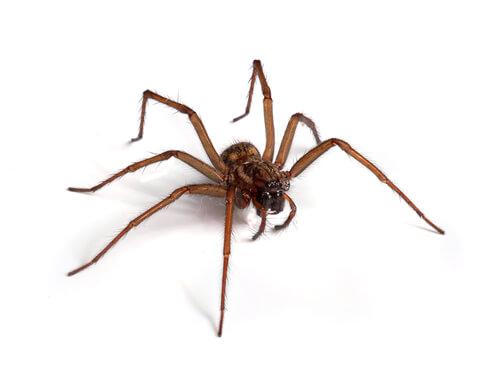 Curiosidades sobre las arañas