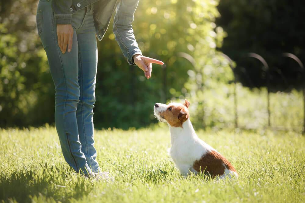 Dar órdenes a un perro