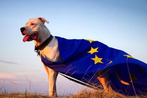 El bienestar animal en la Unión Europea