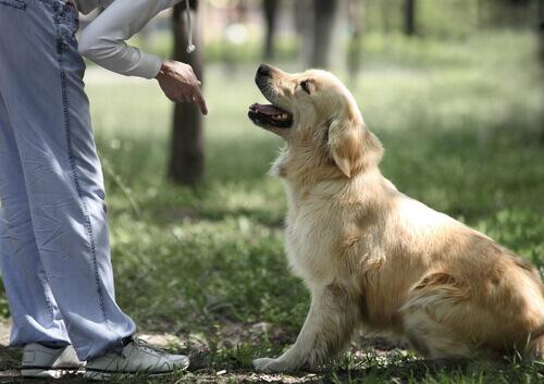 Cómo enseñar al perro a sentarse
