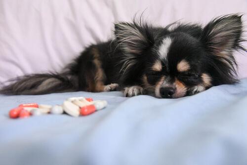 La eutanasia de mascotas: por qué, cuándo y cómo