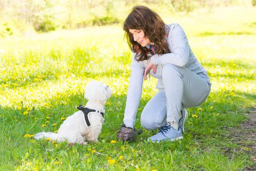 ¿Se puede identificar a un perro por sus heces?
