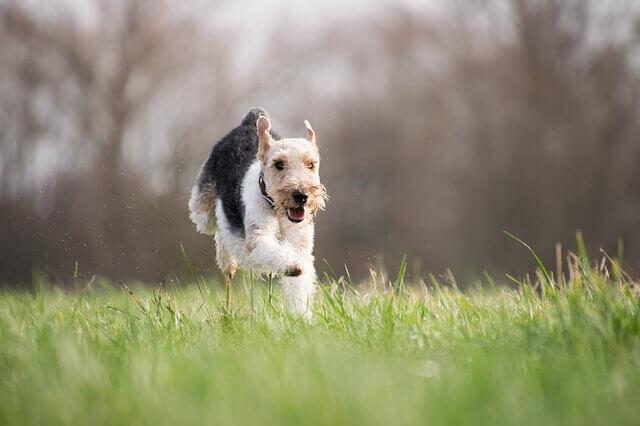 Juegos al aire libre con tu perro