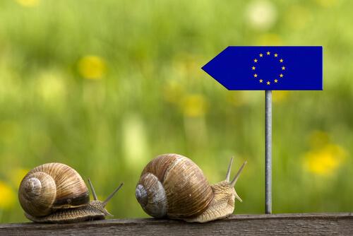 Legislación europea animales