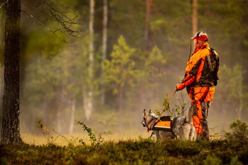 ¿Qué se necesita para obtener una licencia de caza?