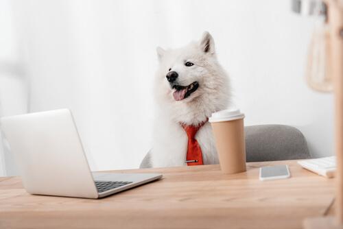 ¿Qué es una mascota corporativa?