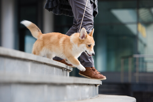 Mascotas en comunidades de vecinos