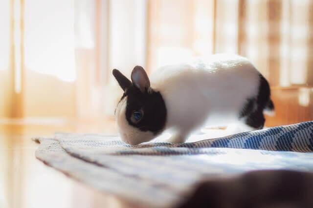 Mascotas más cariñosas: conejo
