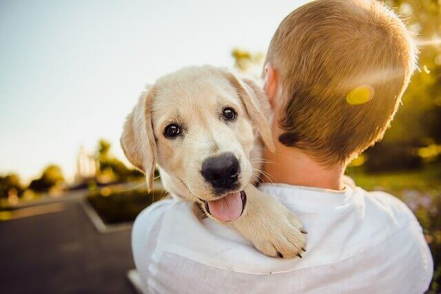 Las 5 mascotas más cariñosas