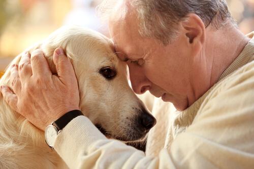 6 necesidades especiales para mascotas mayores