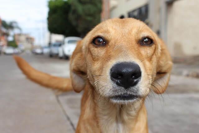 Mitos sobre las mascotas: nariz seca no indica enfermedad