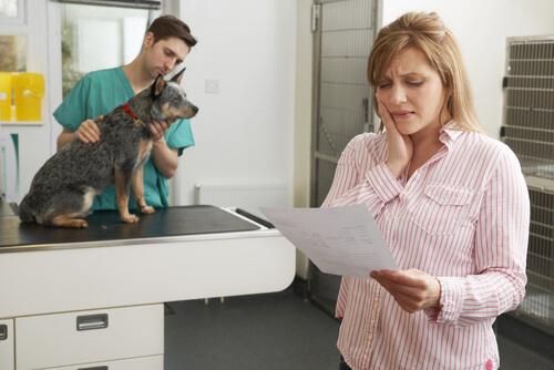 Tipos de seguros de mascotas