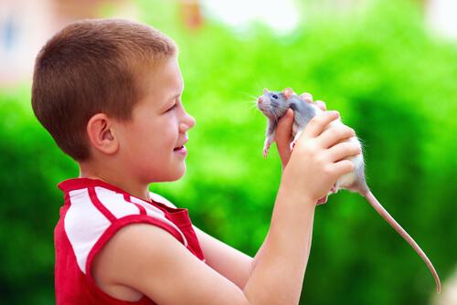 Niño y rata