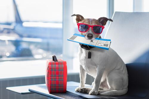Normativa en aeropuertos sobre animales