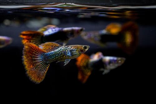 La importancia del pH en el acuario