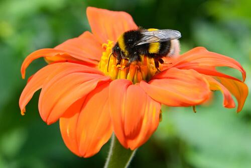 Animales polinizadores y plantas: una simbiosis ancestral