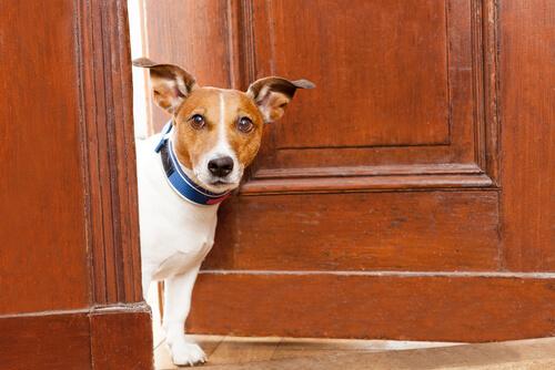 Perro asomado a la puerta