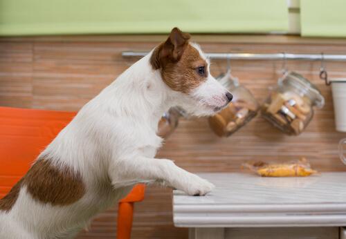 Perro en la cocina