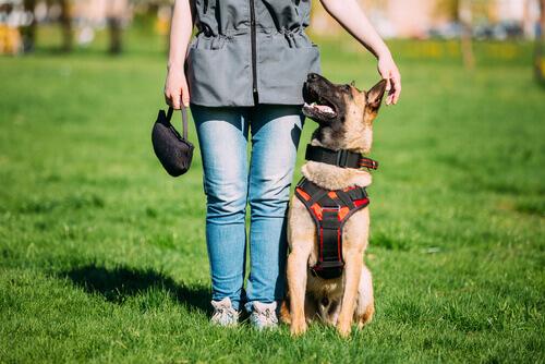 Las diferencias entre un perro bien educado y un perro de mediación