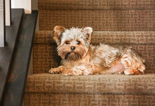 Perro en las escaleras