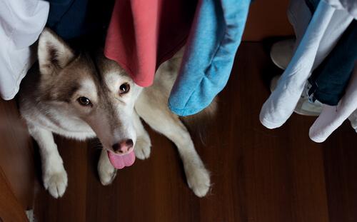 Perro en nueva casa