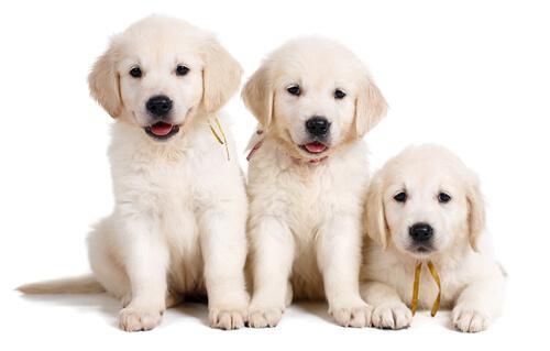 ¿Qué es un perro LOF?