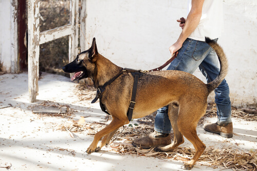 Perros de guardia