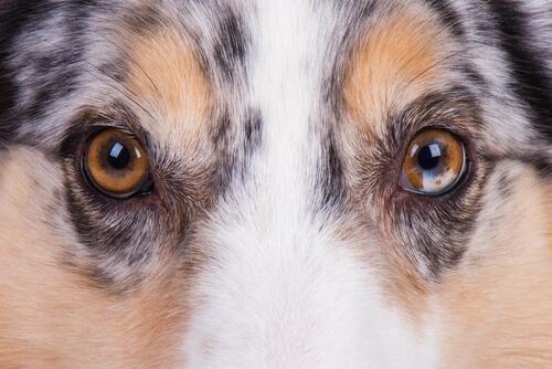 Los perros solo ven en blanco y negro