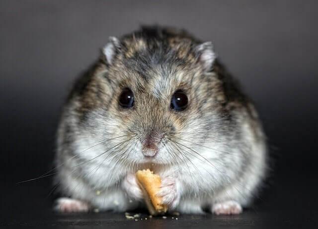 Los problemas digestivos de los roedores, ¿qué hacer?
