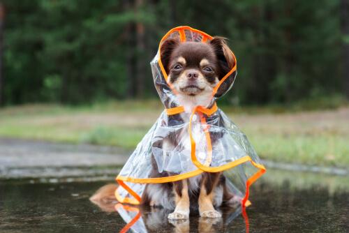 ¿Cómo proteger a los perros del frío?