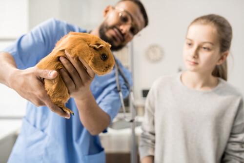 Roedor en el veterinario